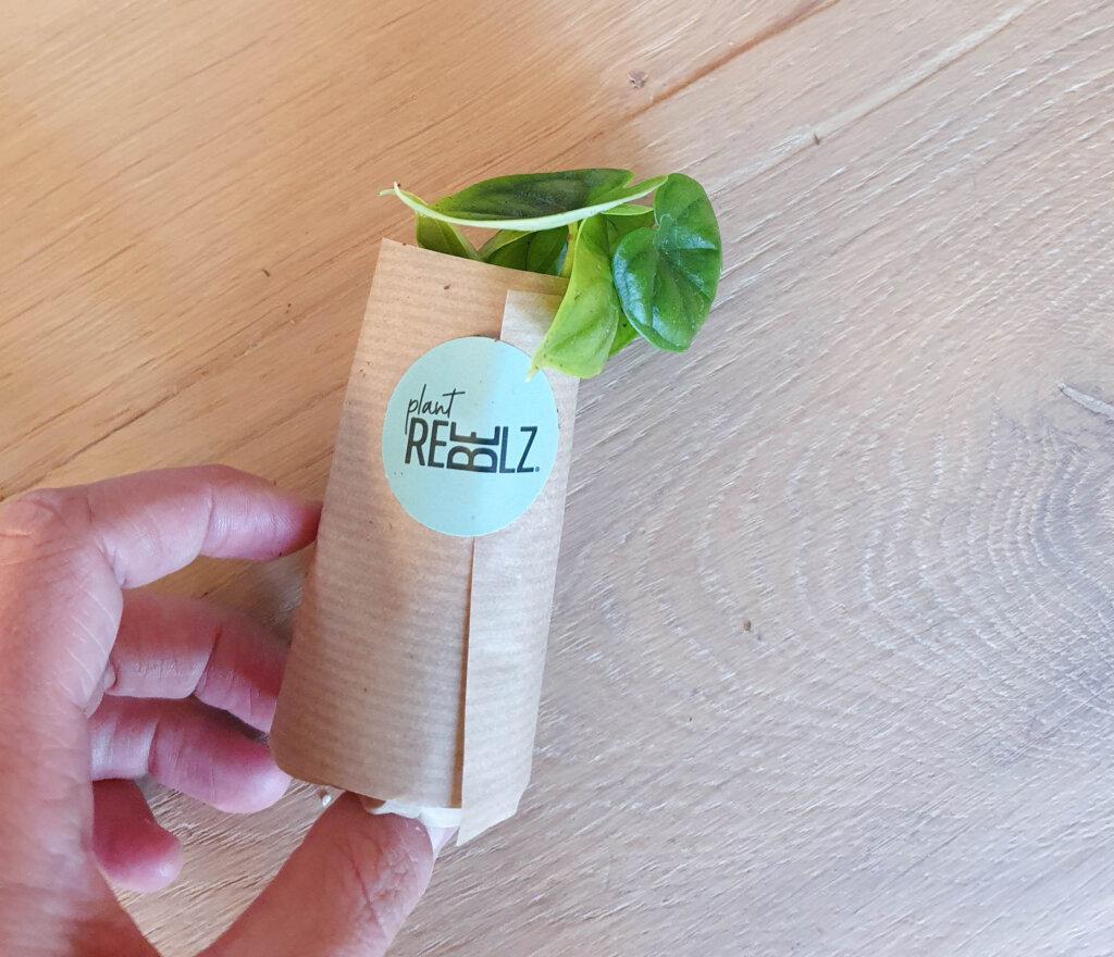 groene stekjes per post