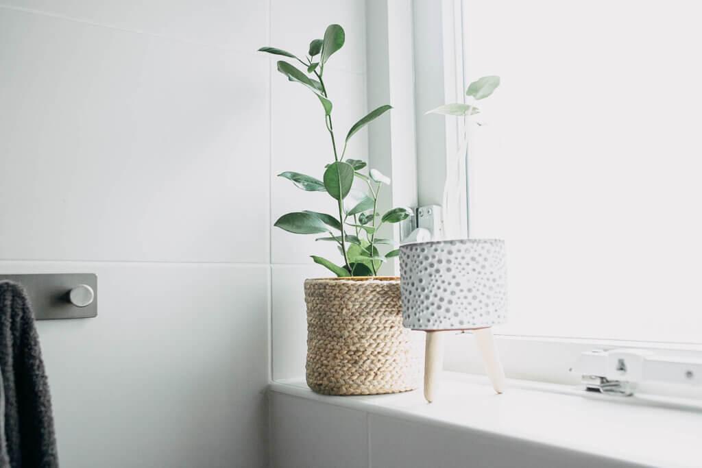 planten in badkamer welke geschikt
