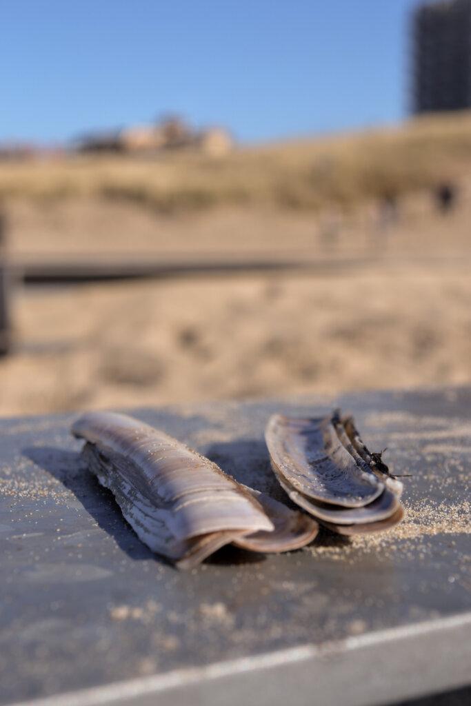 strand Egmon aan Zee
